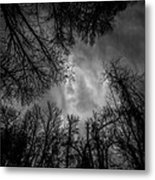 Naked Branches Metal Print
