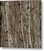 Naked Trees Metal Print