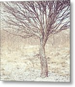 Naked Willow Tree. Winter Poems Metal Print
