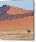 Namib Lanscape Metal Print