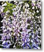 Nancys Wisteria Cropped Db Metal Print by Rich Franco