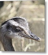Nandu Or Rhea Portrait Metal Print