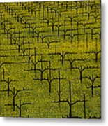 Napa Mustard Grass Metal Print by Garry Gay