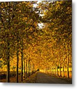 Napa Valley Fall Metal Print by Bill Gallagher