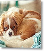 Napping Puppy Metal Print by Kay Pickens