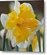 Narcissus 014-2 Metal Print