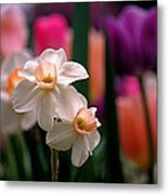 Narcissus And Tulips Metal Print