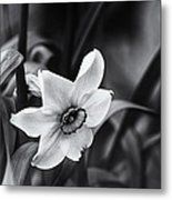 Narcissus In The Shadows Metal Print