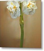 Narcissus Soft Metal Print