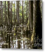Natchez Trace Wetlands Metal Print