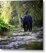 National Forest Bear Metal Print