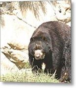 National Zoo - Bear - 12121 Metal Print