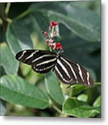 National Zoo - Butterfly - 12121 Metal Print