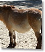 National Zoo - Donkey - 01134 Metal Print by DC Photographer
