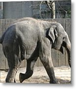 National Zoo - Elephant - 12126 Metal Print by DC Photographer