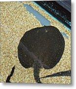 National Zoo - Fish - 011315 Metal Print