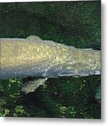 National Zoo - Fish - 12125 Metal Print