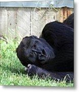 National Zoo - Gorilla - 011339 Metal Print