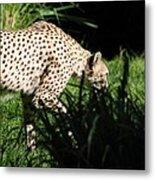 National Zoo - Leopard - 011311 Metal Print