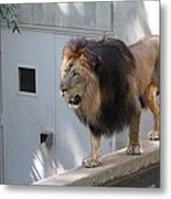 National Zoo - Lion - 01138 Metal Print