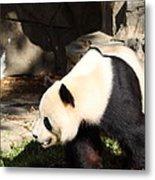 National Zoo - Panda - 011321 Metal Print