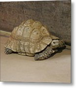 National Zoo - Turtle - 12121 Metal Print