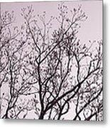 Native Texas Pecan Silhouette Metal Print