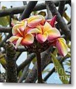 Natural Bouquet  Metal Print