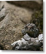 Natural Expression Of A Fowler Toad  Metal Print