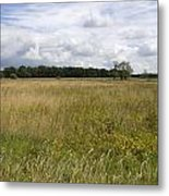 Natural Forestry Gees The Netherlands Metal Print