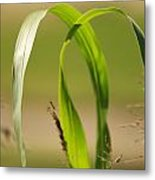 Natural Grass Metal Print