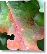 Natural Oak Leaf Abstract Metal Print