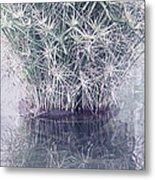 Natural Reflections Metal Print