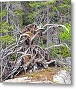 Natural Sculpture Metal Print