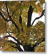 Natural Sunburst Through Autumn Tree Metal Print
