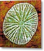 Nature Abstract 5 Metal Print