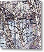 Nature And Texture Metal Print