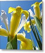 Nature Art Prints Yellow White Irises Flowers Metal Print