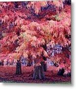 Nature Colors Metal Print
