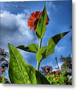 Nature Does Not Hurry Zinnia Standing Tall Metal Print