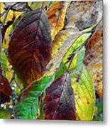 Nature Has Been Recycling For Ages  Metal Print