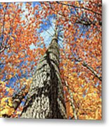Nature In Art Metal Print