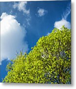 Nature In Spring - Bright Green Tree And Blue Sky Metal Print