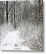 Nature In Winter Under Snow  Metal Print