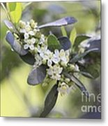 Nature Path Flower Metal Print