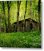 Nature Reclaims Metal Print