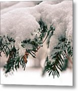 Nature's Art Work Metal Print by Michelle and John Ressler