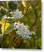 Natures Bouquet Metal Print