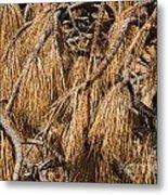 Nature's Brooms Metal Print