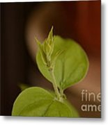 Nature's Creation Metal Print